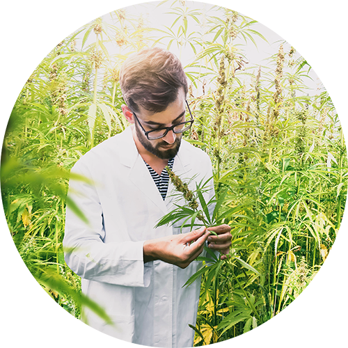Man looking at hemp