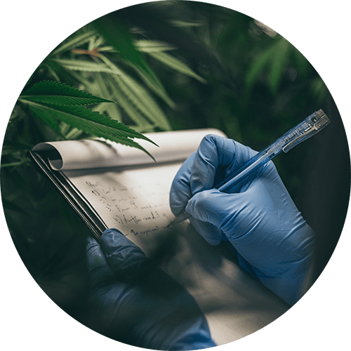 Taking Notes About CBD