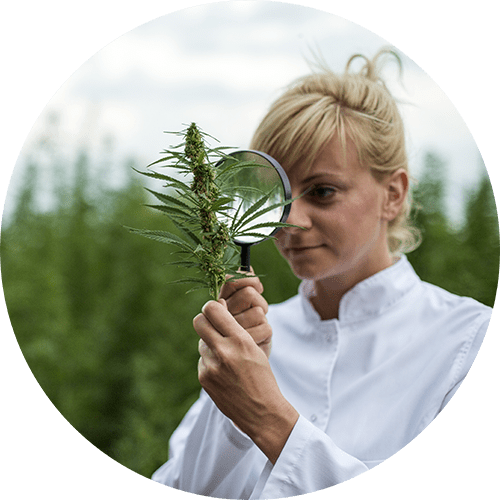 Woman looking at hemp